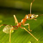hormiga sobre hoja